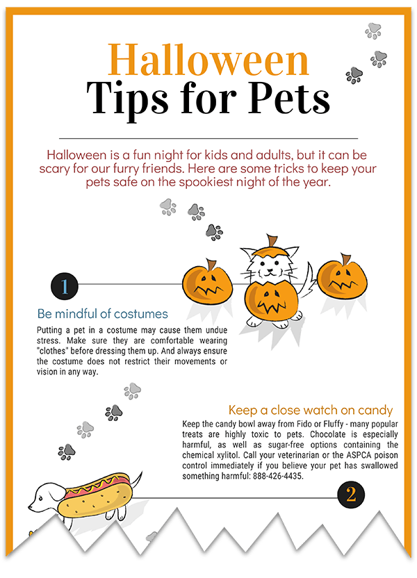 Halloween Tips pet safety infographic download