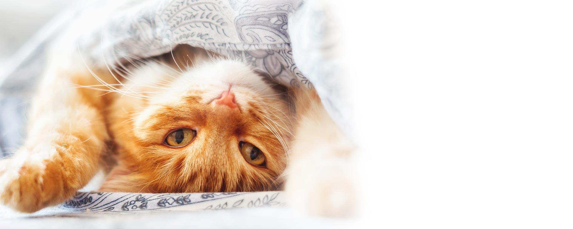 https://www.myhappypets.com/sites/default/files/revslider/image/zylkene-hero-cat.jpg
