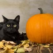 halloween pet safety header image black cat and pumpkin