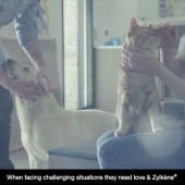 Helping your pet cope with moving