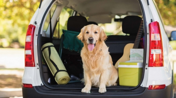 Summer vacation dog in packed car