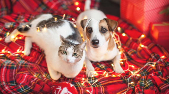 Holiday cat and dog